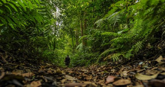 Menelusuri Hutan Di Sukabumi Dari Wisata Alamnya